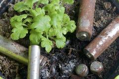 Baterías de corrosión de diversos formas y tamaños Mienten en la tierra al lado de una planta verde creciente Protección del medi Imagenes de archivo