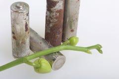 Baterías de corrosión Mienten en una superficie blanca, cubierta con una rama de orquídeas con los brotes unrevealed Protecti amb Fotos de archivo libres de regalías