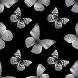 Baterflay colored-black01 Images libres de droits