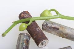 Baterias de corrosão Encontram-se em uma superfície branca, coberta com um ramo das orquídeas com botões unrevealed Protecti ambi fotografia de stock royalty free