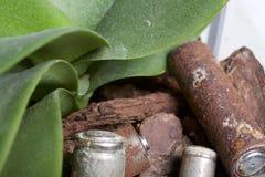 Baterias de corrosão de vários formas e tamanhos Encontram-se na terra ao lado de uma planta verde crescente Protecção ambiental fotografia de stock
