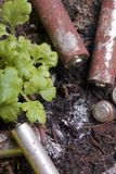 Baterias de corrosão de vários formas e tamanhos Encontram-se na terra ao lado de uma planta verde crescente Protecção ambiental imagens de stock royalty free