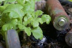 Baterias de corrosão de vários formas e tamanhos Encontram-se na terra ao lado de uma planta verde crescente Protecção ambiental foto de stock royalty free