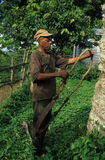 Batete - Guinea Ecuatorial Imagen de archivo