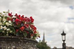 Bath, Angleterre - fleurs contre un ciel nuageux Image libre de droits