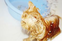 Bath of cat Stock Image