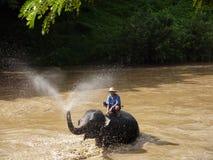 Bath d'éléphant Photo libre de droits
