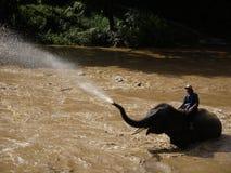 Bath d'éléphant Images libres de droits