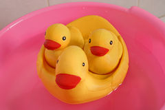 Bath ducks Royalty Free Stock Photography
