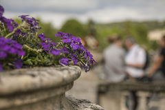 Bath, England - flowers/soft focus. This image shows a view of one of the streets in the city of Bath, England Royalty Free Stock Images