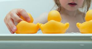 Bath play with rubber ducks Royalty Free Stock Photo