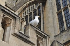 Bath's Birdlife Royalty Free Stock Image