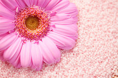 Bath salt with gerbera Royalty Free Stock Image