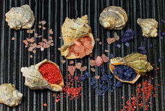 Bath salt in shells Stock Images