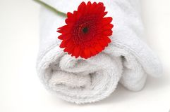 Bath Spa Massage. Modern red gerbera on clean white bath towel for a cleansing and refreshing spa or bath treatment Royalty Free Stock Image