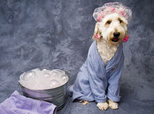 Bath Time for Doggie stock images