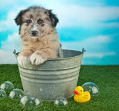 Bath Time Puppy Royalty Free Stock Photos