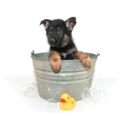 Bath Time Stock Photo