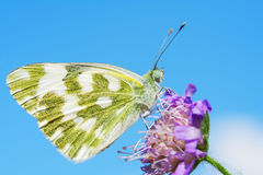 Bath White Butterfly Royalty Free Stock Images