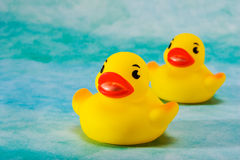 BathDucks Stock Afbeeldingen