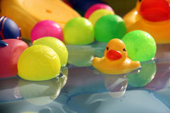 Bathing Baby Duck Toy Stock Photos
