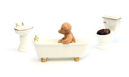 Bathing bear Stock Images