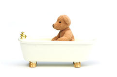 Bathing bear Royalty Free Stock Photo