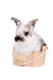 Bathing bunny Stock Photo