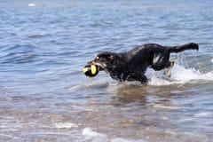 Bathing Dog Royalty Free Stock Image