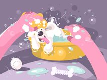 Bathing dog in basin with water Stock Photography