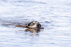 Bathing Dog Stock Image