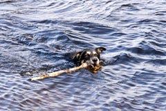 Bathing Dog Royalty Free Stock Photos