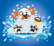 Bathing dog. Stock Images