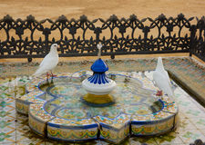 Bathing doves, Seville, Andalucia, Spain Stock Images