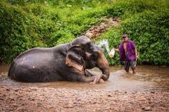Bathing elefant mahout, Khao Sok sanctuary, Thailand Royalty Free Stock Photo