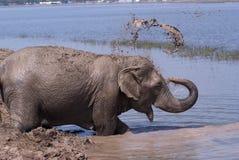 Bathing elephant Royalty Free Stock Photos