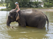 Bathing with an elephant Royalty Free Stock Photo