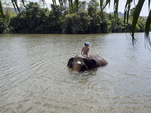 Bathing with an elephant Stock Photo