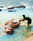 Bathing of elephant Stock Image