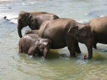 Bathing elephants Royalty Free Stock Photography