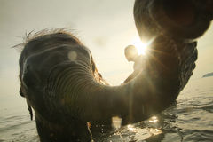 Bathing elephants in the Gulf of Siam royalty free stock photo
