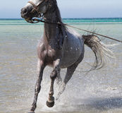 Bathing of a horse Stock Photos