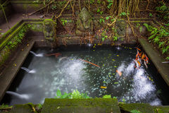 Bathing Pool in the The Holy Spring Temple,  Sacred Monkey Forest Sanctuary, Ubud, Bali Stock Photos