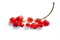 Bathing red berries. Red berries bathing in white Stock Photos