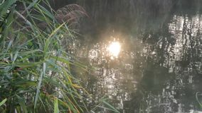 Bathing the sun in the pond stock footage