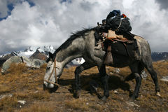 Bathorse. Loaded with backpacks in Cordillera Blanca, Peru Stock Images