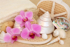 Bathroom Accessories. With orchid flowers and sea shells over mottled cream background Stock Image