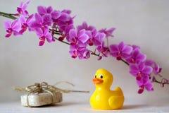 Bathroom colors. Bathroom scene with rubber-duck Stock Photography