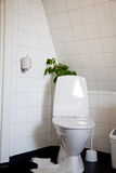 Bathroom design. Bathroom with the toilet as the main object, stands in a special way in the corner, with a green plant behind it Stock Images