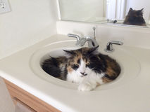Bathroom Friendly Cat Stock Images
